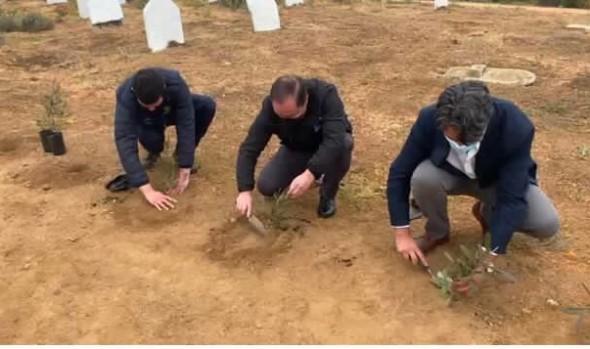 Con proyecto de arborización Cementerio Santa Inés de Viña del Mar mejora su parte alta
